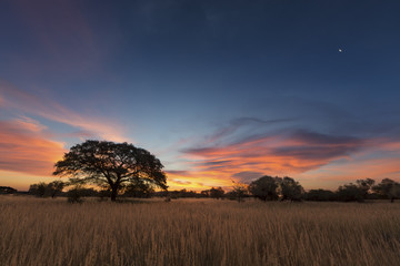 Landscape photo of a dead silhouette tree at sunset with blue sky and clouds
