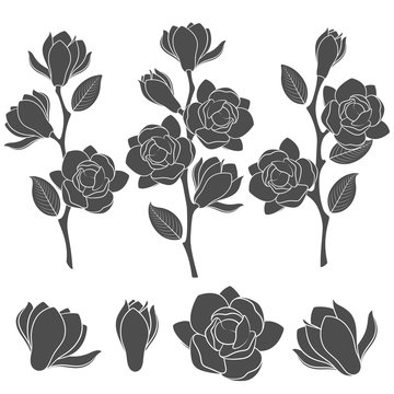 Set of black and white illustrations with flowering magnolia branches. Isolated vector objects on white background.