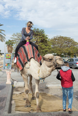 The camel's driver rolls a visitor on a camel in Yeriho in Israel