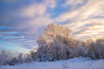 amazing landscape with frozen snow-covered trees in winter morning