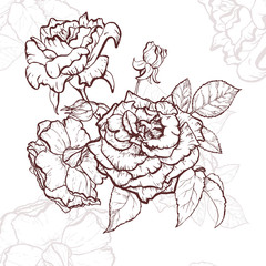 Rose hand drawn illustration