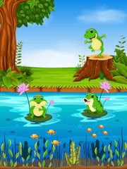 Frog swimming in the river