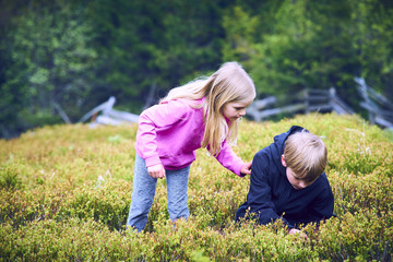 Child blond girl and boy picking fresh berries on blueberry field in forest. Children pick blue berry in the woods. Siblings playing outdoors. Children forest activities