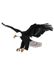 eagle realistic illustration drawing black background