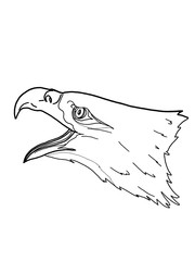 eagle portrait realistic illustration drawing  white background