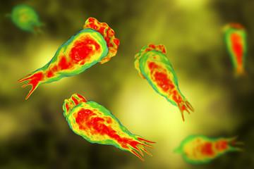 Brain-eating amoeba infection, naegleriasis. Trophozite, infectious form of the parasite Naegleria fowleri, 3D illustration