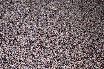 Poster Coffee beans Fábrica de café en México
