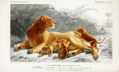 Illustration of a lion