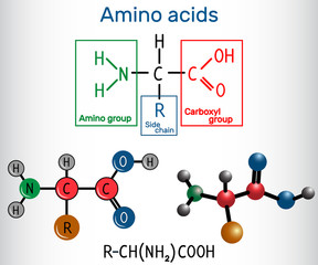 General formula of amino acids, which are building blocks of proteins and muscle fibers. Structural chemical formula and molecule model
