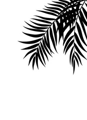 Beautifil Palm Tree Leaf  Silhouette Background Vector Illustration