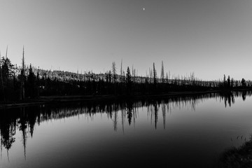 Reflection of trees and moon on still water, calming nature background.
