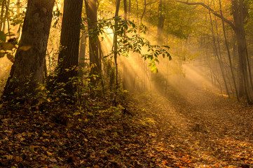 Mystical autumn forest scenery with visible sun rays passing through the trees