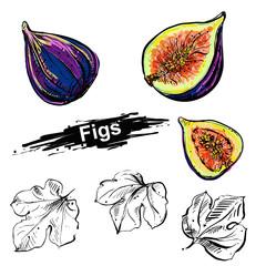Hand drawn illustration set of color fig, leaf. sketch. Vector eps 8