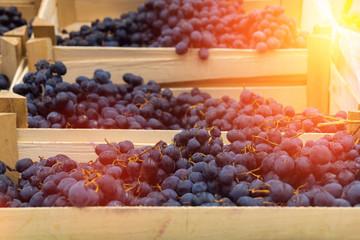 dark grapes in boxes