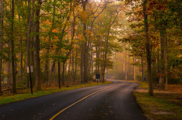 Autumn forest road scenery with colorful foggy trees