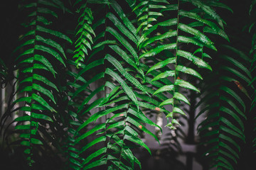 Fern green leaves. Flat lay. Nature concept