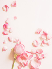Roses and rose petals on a textured paper pink background. Background for Mother's Day, St. Valentine's Day, March 8. Top view, flat lay.
