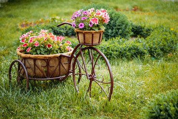 Poster de jardin Velo Decorative Vintage Model Old Bicycle Equipped Basket Flowers Garden