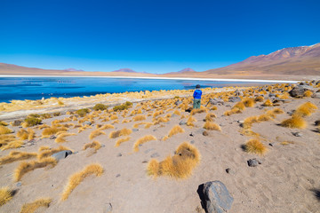 """Tourist at """"Laguna Honda"""", a frozen salt lake with flamingos on the way to the famous Uyuni Salt Flat, travel destination in Bolivia. Wide angle view with clear blue sky."""