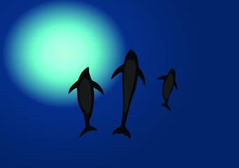 Dolphins in blue ocean illustration vector