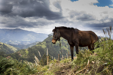 Proud horses on the Andes Mountains