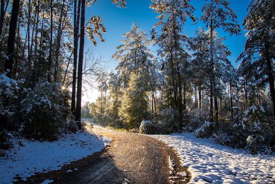 Louisiana snow blankets a state park