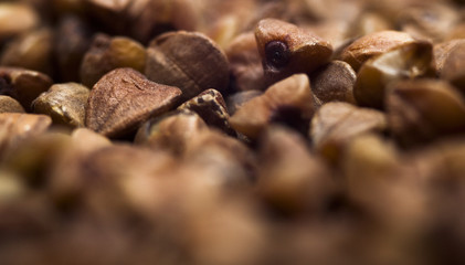 buckwheat kernel closeup for a healthy diet