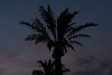 Palm tree silhouette in the sunset with clouds in the background