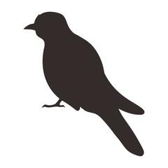 Bird silhouette, Vector illustration