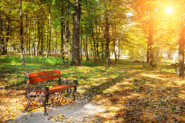 autumn park with paths and benches and sun