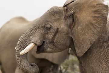 Elephants in Kruger Park