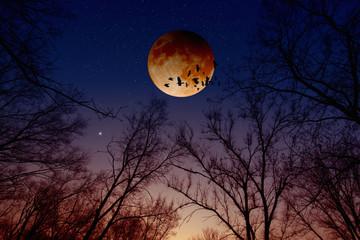 Lunar, moon eclipse