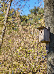 Birdhouse hanging on tree in Park