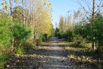 Natural Autumn pathway of season