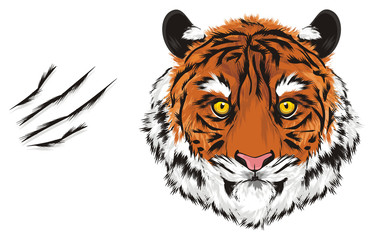 tiger, wild cat, cat, striped, animal, zoo, predator, claws, orange, roar, India, illustration, muzzle, cutting, scratched,