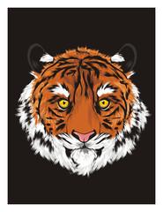 tiger, wild cat, cat, striped, animal, zoo, predator, claws, orange, roar, India, illustration, muzzle, black