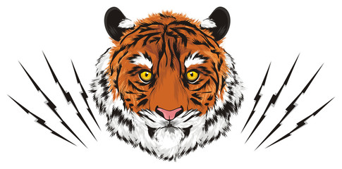 tiger, wild cat, cat, striped, animal, zoo, predator, claws, orange, roar, India, illustration, circus, scratching, cutting, scratched,