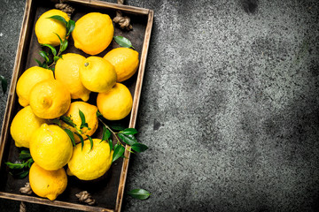 Fresh lemons on a tray.