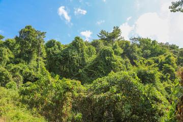 undurchdringlicher Dschungel