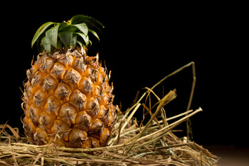 pineapple. straw. black background