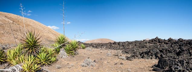 New life, Lanzarote, Canary Islands