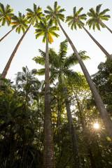 Botanical Garden in Rio de Janeiro, Brazil