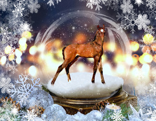 Two Week-old Colt in a Snowglobe