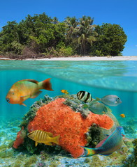 Split view over and under the water near a tropical beach shore with colorful fish and a red encrusting sponge underwater, Caribbean sea