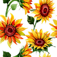 Wildflower sunflower flower pattern in a watercolor style. Full name of the plant: sunflower. Aquarelle wild flower for background, texture, wrapper pattern, frame or border.