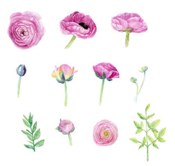 Ranunculus handpainted watercolor clip art floral illustration wedding set flower spring beautiful holiday invitation