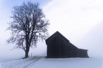 Inverno nella nebbia