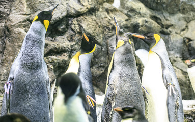 Group of penguins in a zoo