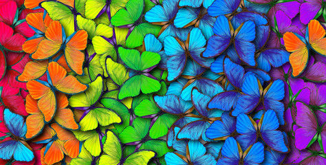 Colors of rainbow. Pattern of multicolored butterflies morpho, texture background.