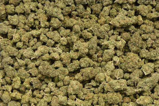 A Large pile Of Bud material